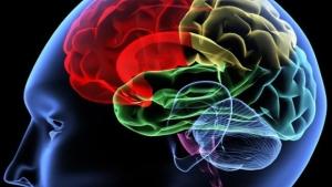 brain-colors