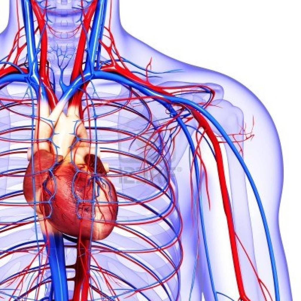 heart-1024x1024