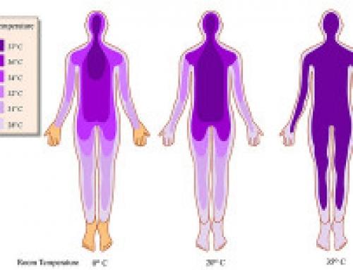 Study – Body Core Temperature and the Life Vessel