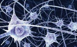 neurons-2-250x155