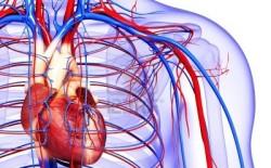heart-250x155